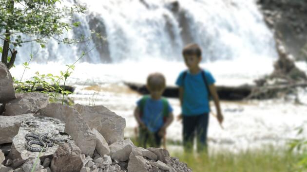 Två barn i bakgrunden, i förgrunden ligger en huggorm