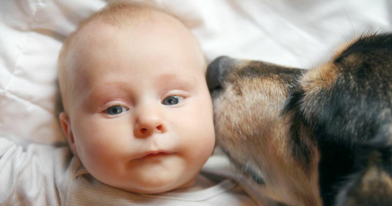 Studie: Därför är det bra att växa upp med hund eller katt