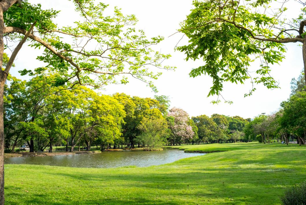 En grön park